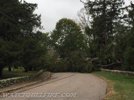 A fallen tree and wires blocks Foster Cove Road